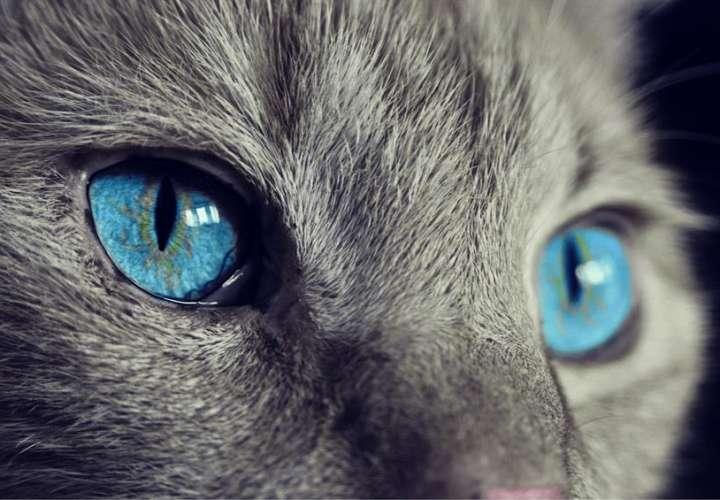 El mundo visto como lo ven los animales