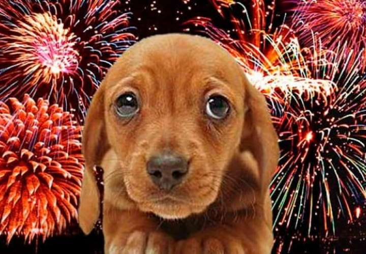 Proteja a las mascotas de los fuegos artificiales
