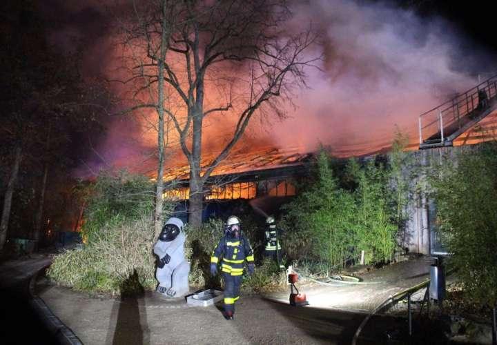 Incendio mata a más de 30 animales en zoo de Alemania