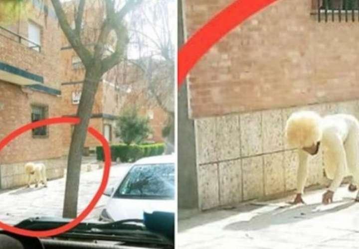 Se disfrazó de perro para violar la cuarentena