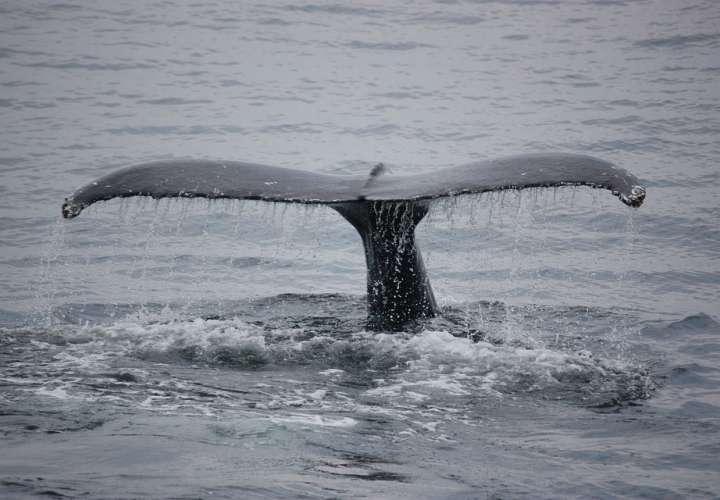 Canal de Panamá activa medidas temporales para proteger la fauna marina