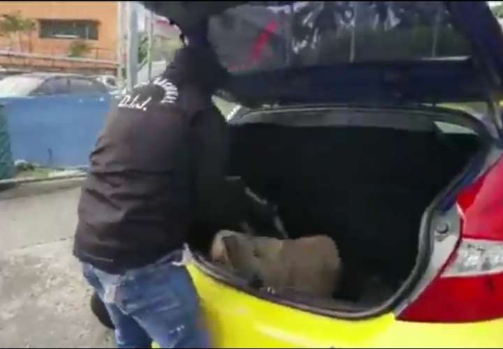 Transportaba 50 paquetes de droga en el taxi [Video]