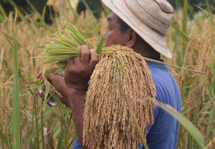 Inhabilitan 37 registros sanitarios de arroz importado