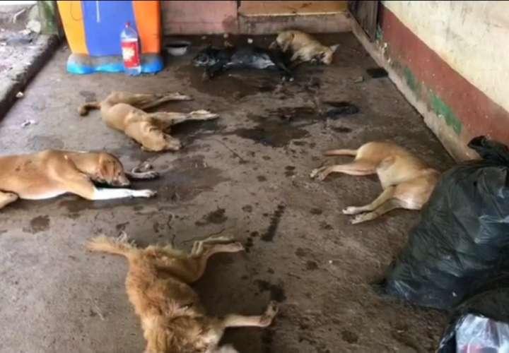 ¡Desalmados! Envenenan a 20 perros en Nuevo Emperador (Video)