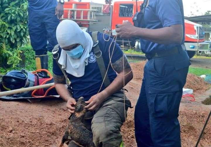 Bomberos rescatan un perrito atrapado