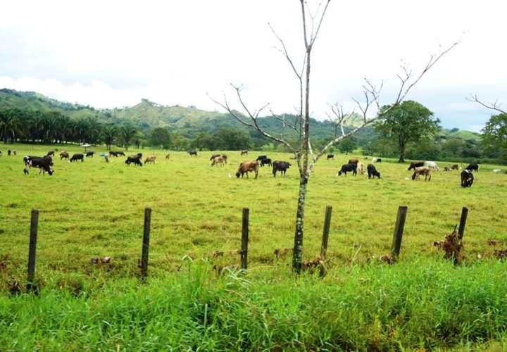 Salcedo: El sector agropecuario tendrá rumbo distinto