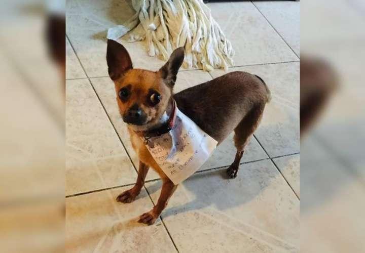 ¡Cuarentena! Envió a la perra a comprar 'Chetoos' (Fotos)