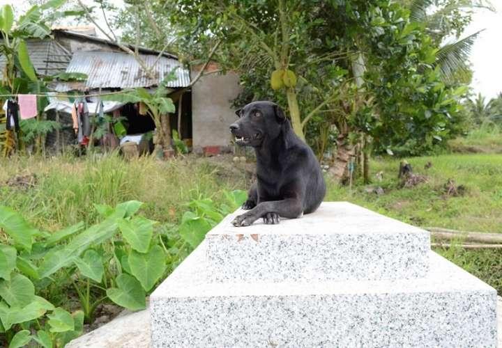 Mino, una perra de cuatro años que pasa la mayor parte del día sobre la lápida de un niño de 2 años con el que compartió su primer año de vida. EFE