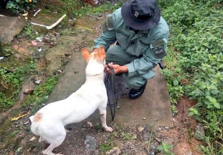 Trazan estrategias para controlar proliferación de perros en La Joya