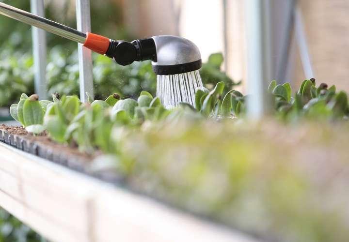 Ordenan racionalización del agua a partir del 7; prohibido regar las plantas