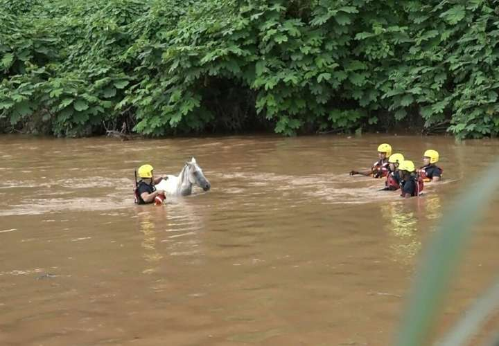 Rescatan caballo ciego en aguas del río La Villa