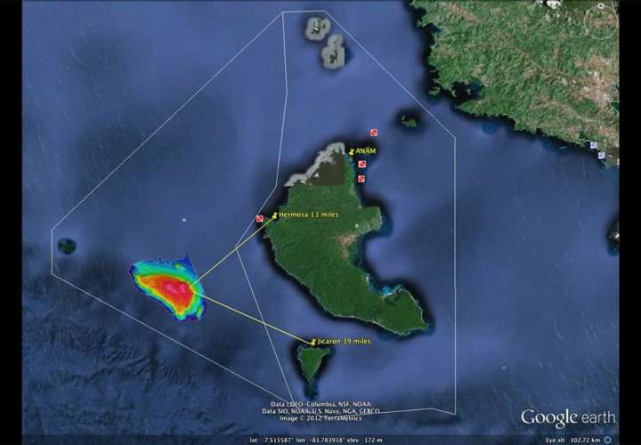 La nueva especie fue ubicada a 60 kilómetros del Pacífico continental de Panamá, por investigadores del Instituto Smithsonian de Investigaciones Tropicales en Panamá. Foto: Stri