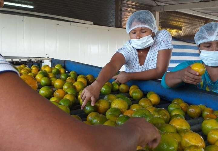 Reactivación de la exportación de naranjas fijada para febrero