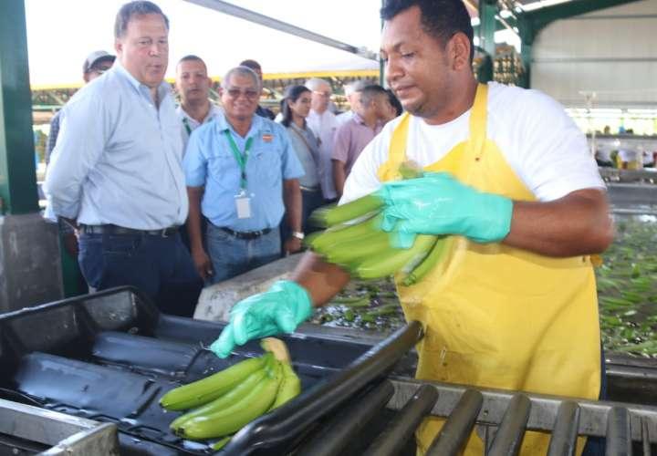 El oro verde al rescate de Puerto. Se reactiva producción bananera