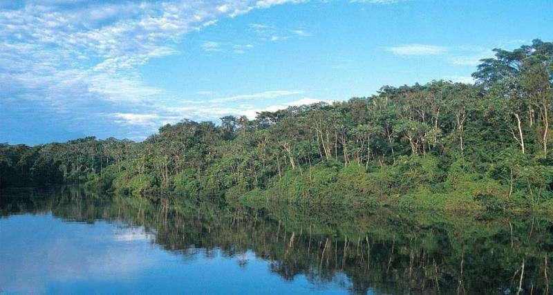 Reserva natural Pacaya Samiria en la Amazonía peruana.