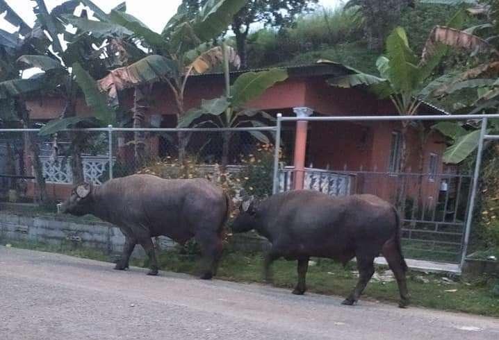 Residentes de El Polvorín temen que estos animales los ataquen.
