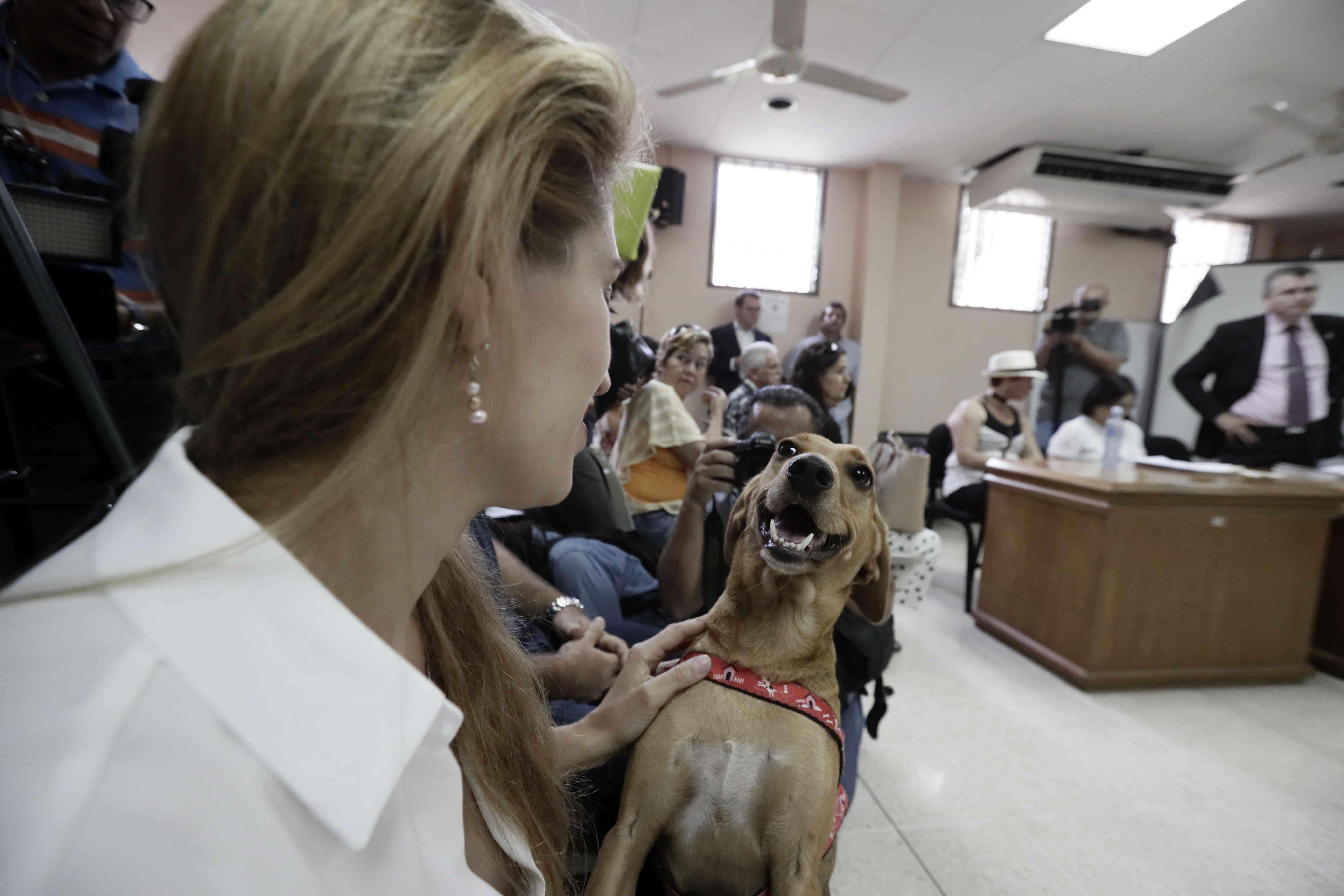 Isabel Aguilar juega con su perro Campeón este viernes en San José (Costa Rica). EFE