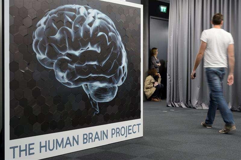 Fotografía de un cerebro humano durante una rueda de prensa sobre el Proyecto Cerebro Humano en el Instituto Federal de Tecnología suizo, en el campus Biotech de Ginebra (Suiza). EFE/Archivo