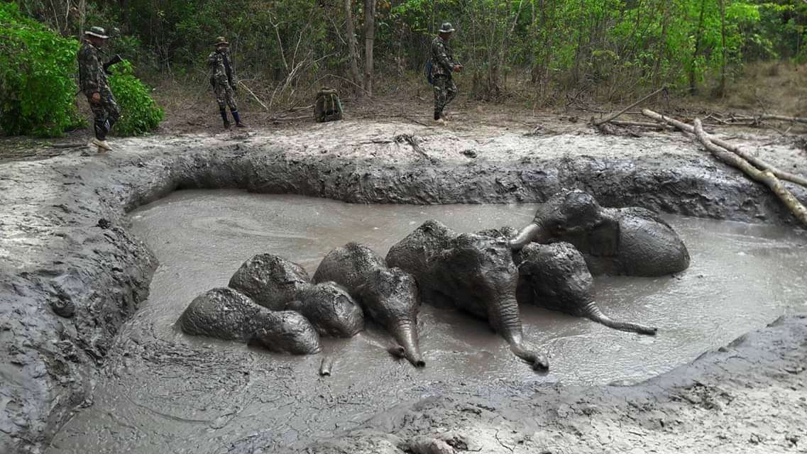 agentes del Parque Nacional que se preparan para sacar a seis crías de elefante atrapadas en un charco de lodo en el recinto, en la provincia de Nakhon Ratchasima, en el noreste de Tailandia. AP
