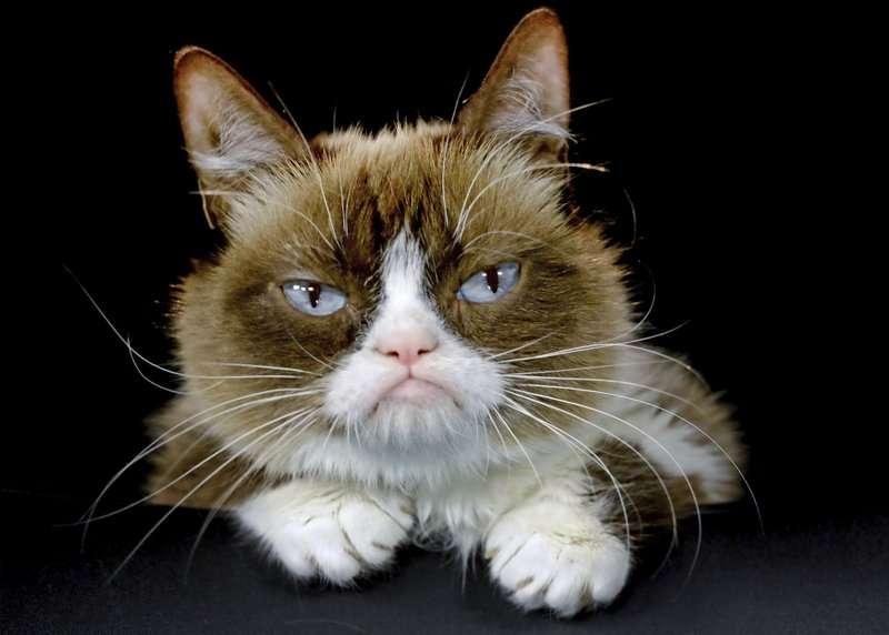 "En la imagen ""Grumpy Cat"" .  Foto: AP"