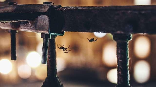 ¿Qué haría si su casa fuera infestada por decenas de mortales arañas?  /  Foto: Ilustrativa - Pixabay