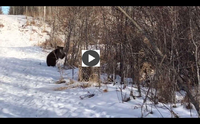 La vida silvestre brinda a quien la aprecia toda clase de escenas.