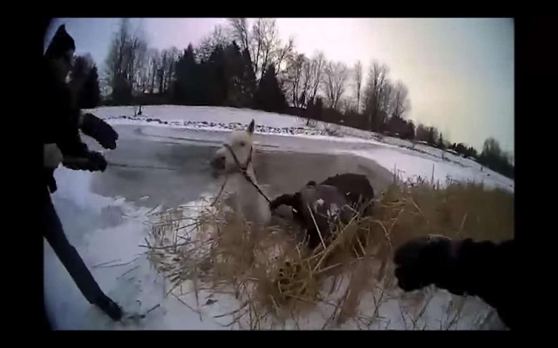 El animal enfrentaba una muerte segura por congelamiento si no hubiera recibido ayuda.