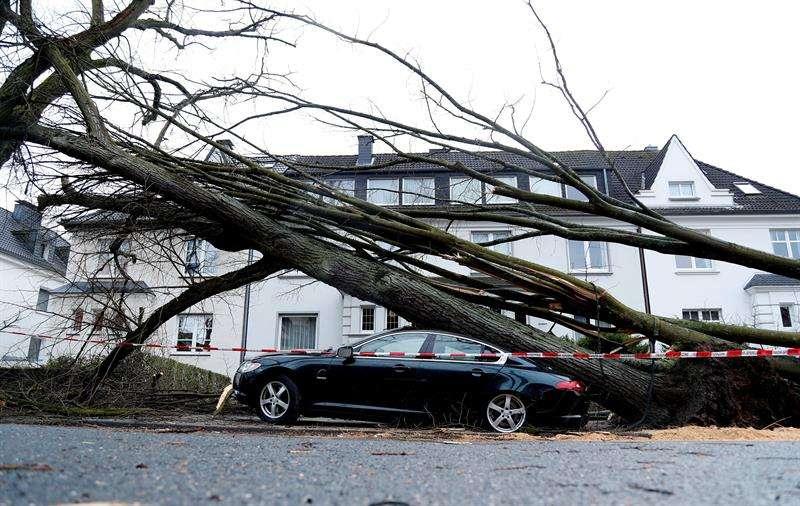 Un árbol cayó sobre un coche en Dortmund (Alemania). EFE
