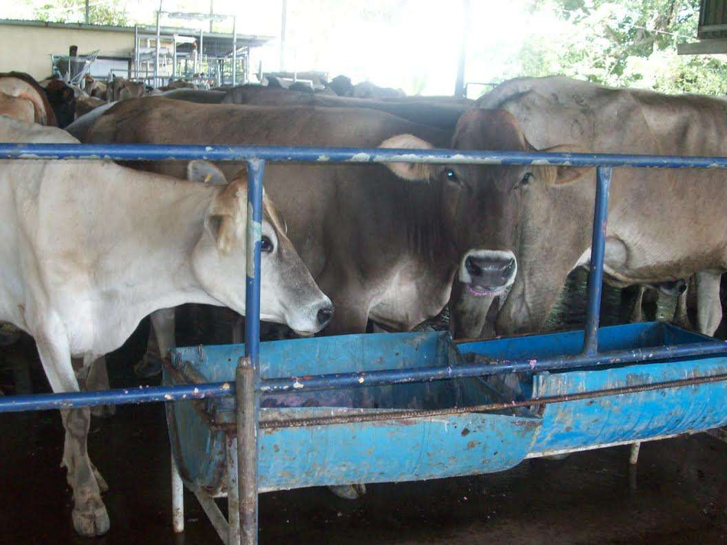 Los productores de leche se quejan