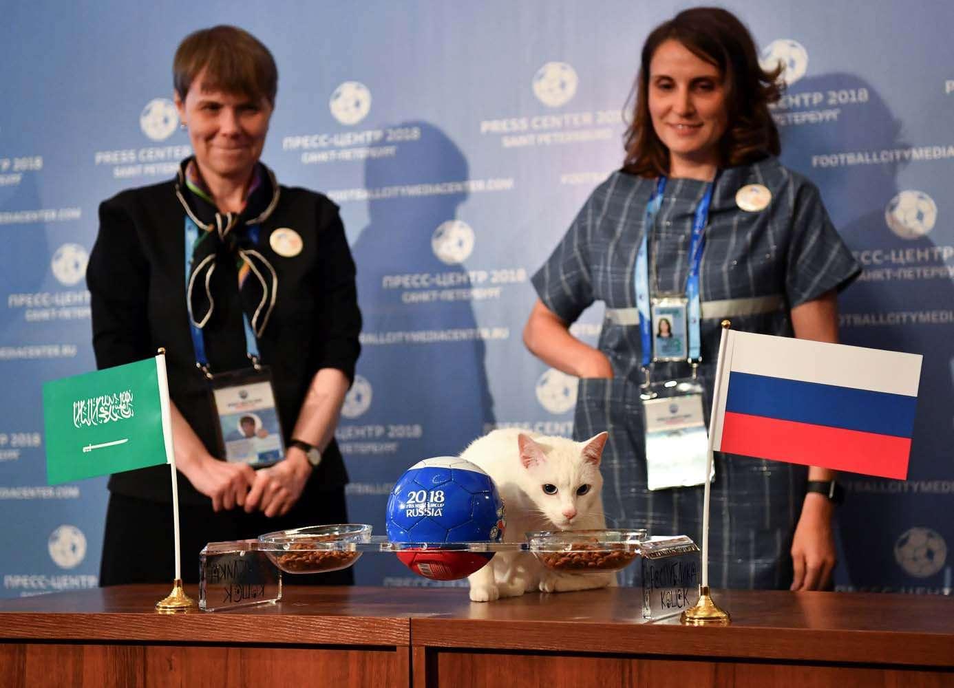 El gato Aquiles es uno de los cazadores de ratones del Museo Estatal del Hermitage