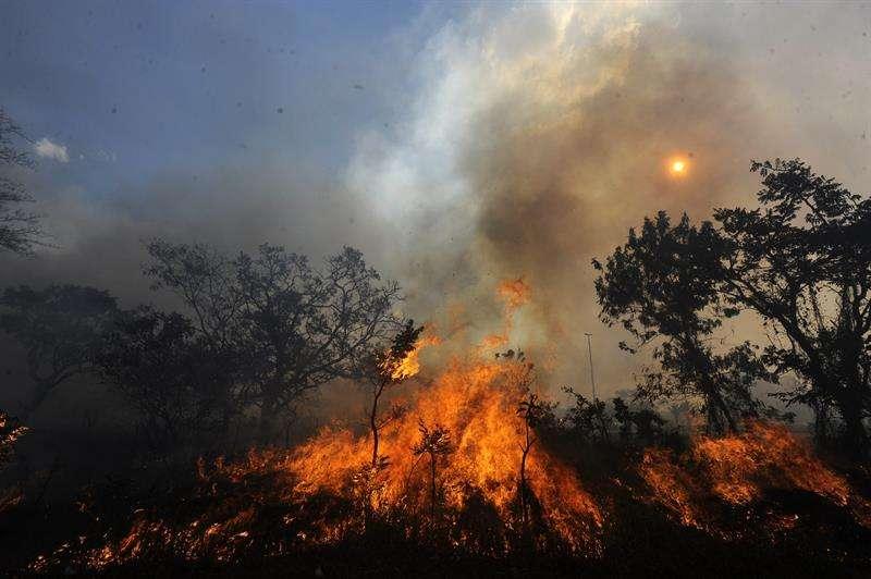 La unidad de bomberos que trabaja en la zona mantiene la alerta y continúa las labores de extinción, ya que el fuego solo está controlado en un 35 % en las 202 hectáreas que se han visto afectadas. EFE/Archivo