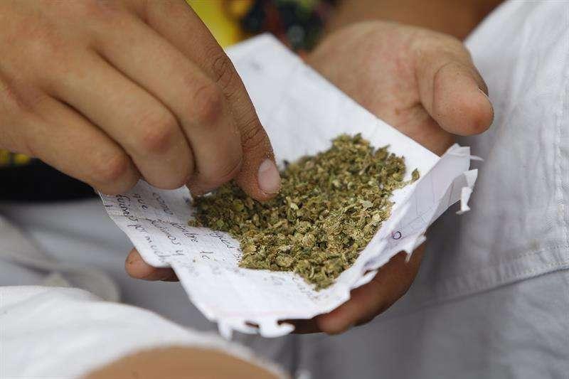 La Suprema Corte de México estableció hoy jurisprudencia para el consumo recreativo de marihuana, decisión permitirá cultivar y consumir la planta con fines recreativos a cualquier ciudadano que solicite un permiso al Gobierno federal. EFE/ARCHIVO