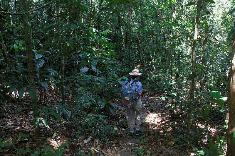 El Sistema de Información y Manejo Sostenible de Bosques utilizará datos satelitales para monitorear la superficie forestal neta en el contexto de la variabilidad y el cambio climático. EFE/Archivo