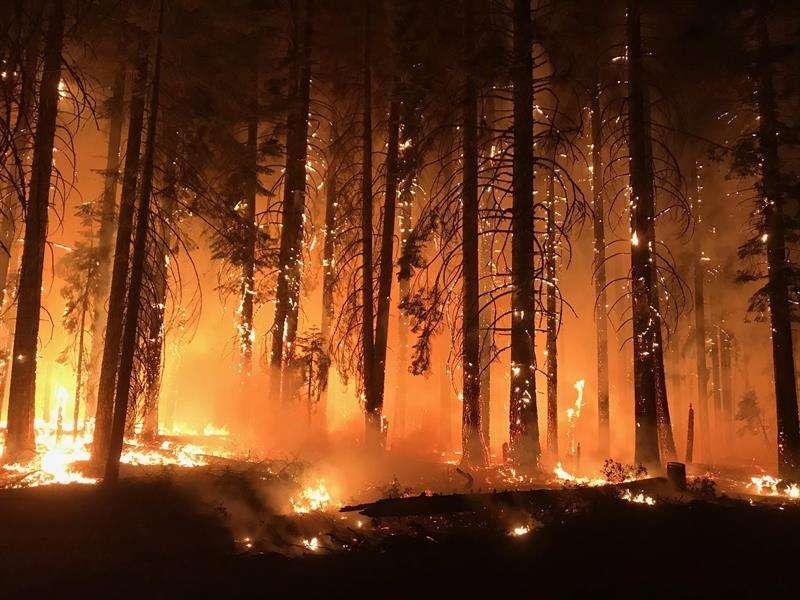 Un grupo de bomberos mientras combaten las llamas en el incendio de Camp Fire, California. EFE/ Usfs/nwcg