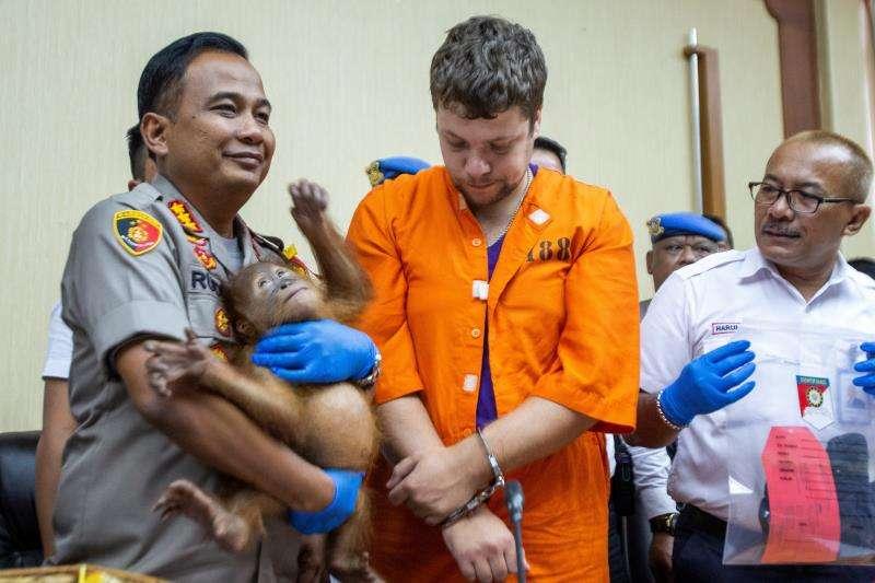 El sospechoso ruso Andrei Zhestkov (c) es escoltado por un policía que sostiene en brazos al orangután de dos años que supuestamente iba a ser vendido ilegalmente en Rusia. EFE