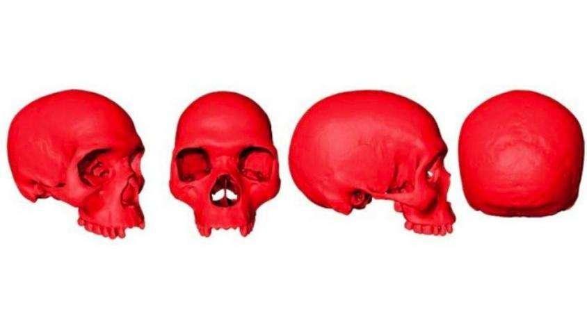 """Para los investigadores, este es un cráneo """"sorprendentemente moderno"""". (Foto: © Aurélien Mounier / CNRS-MNHN)"""