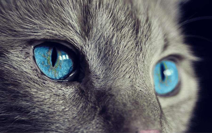 El gato, que como la mayoría de los animales tienen sistemas visuales completamente diferentes a los humanos. EFE