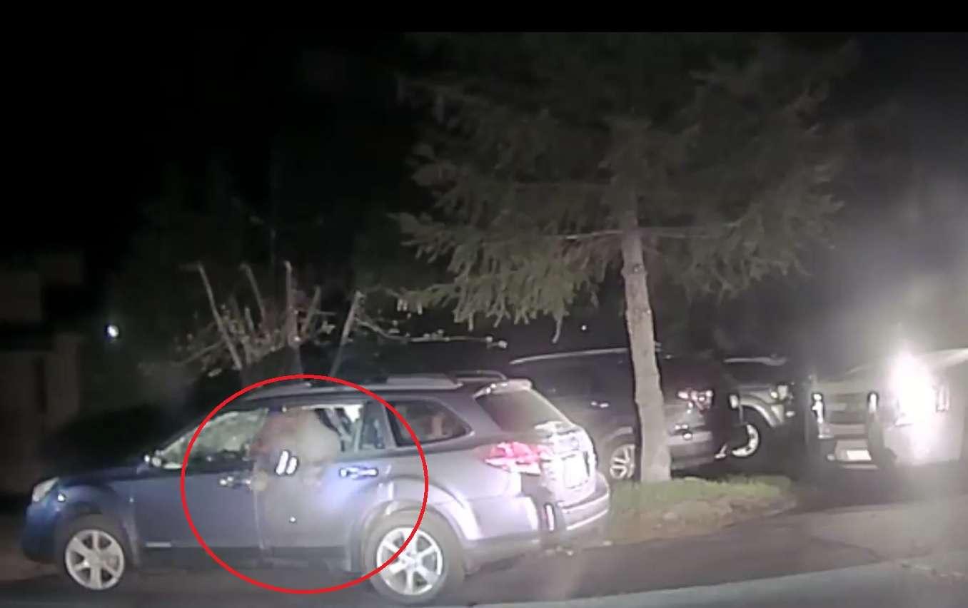 Captura de video oficina del aAlguacil del condado de Placer.