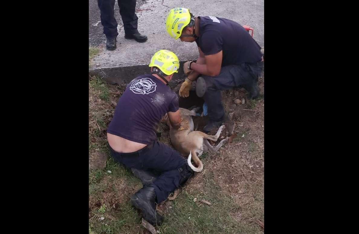 El perro se encuentra sano y salvo. Foto: @BCBRP