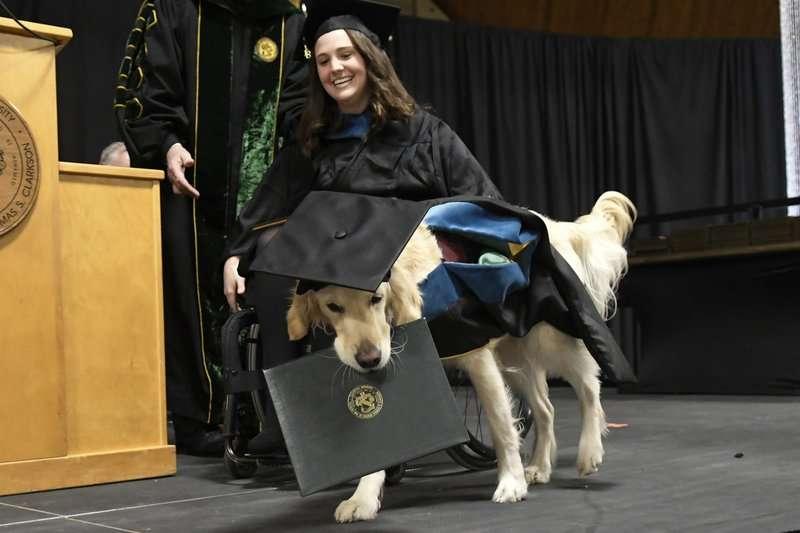 Griffin Hawley, un perro de servicio de raza golden retriever, recibe su diploma honorario durante una ceremonia de la Universidad de Clarkson en Potsdam, Nueva York. (AP Foto/Steve Jacobs).