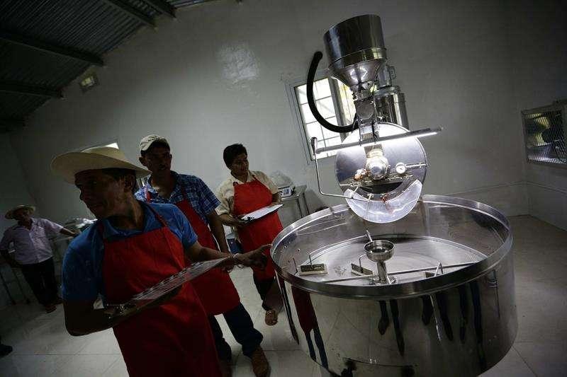 Residentes de Las Gaitas tuestan café en la primera planta procesadora en esa zona del distrito de Capira como parte del Programa de Incentivos Económicos Ambientales, que desarrolla el Canal de Panamá en las comunidades de la Cuenca Hidrográfica.  EFE