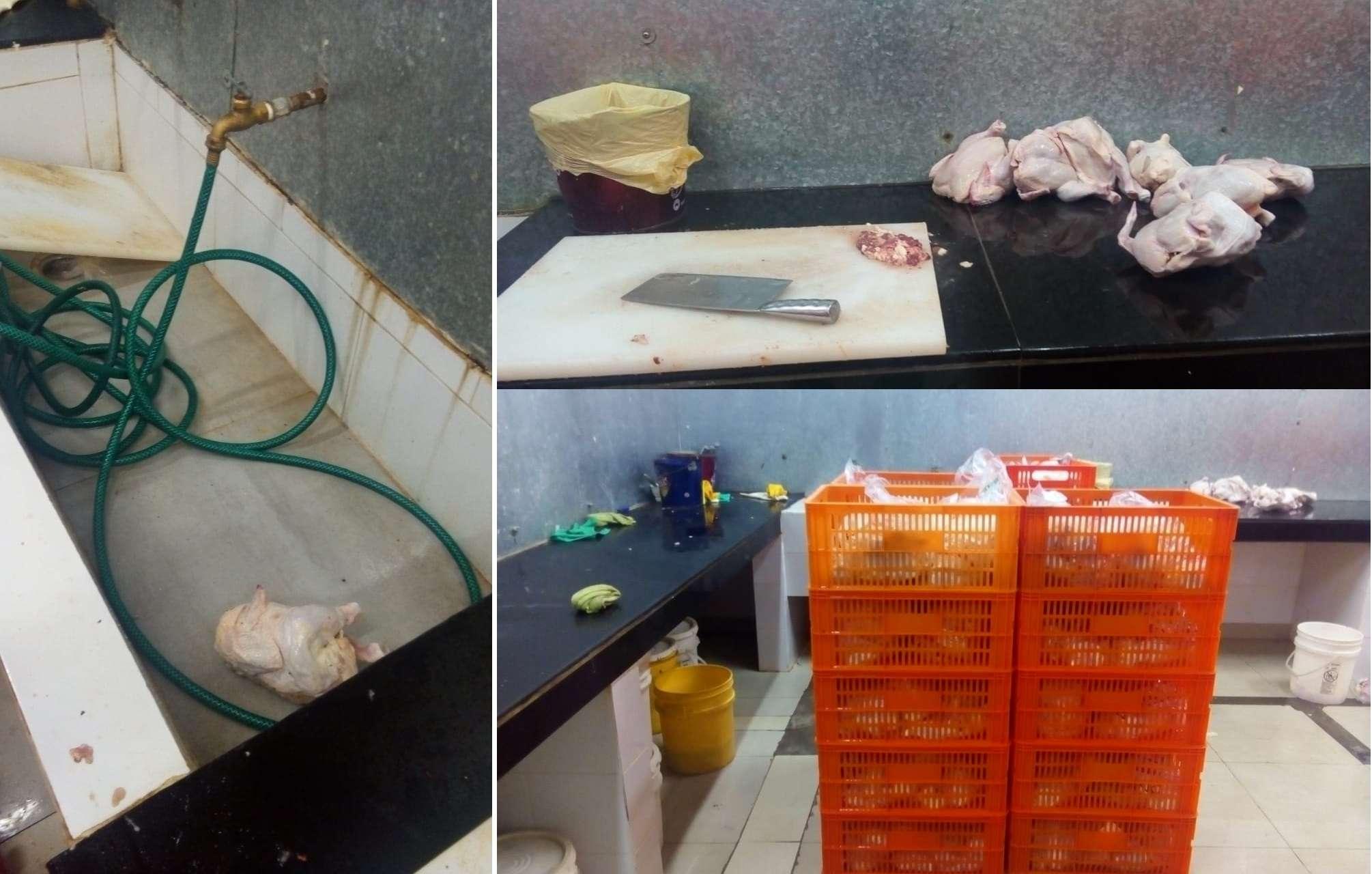 El Minsa ubicó varias anomalías en empresa de reempaque de pollo.