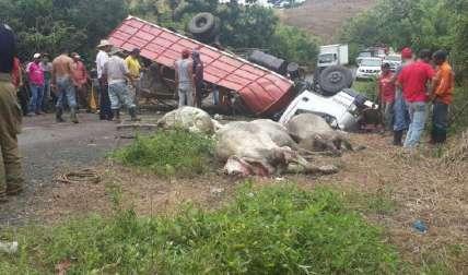 Diez de las reses murieron en el accidente. Al sitio llegaron curiosos y autoridades. El herido está en un hospital.
