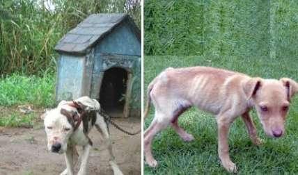 Los perros se observan visiblemente desnutridos.  /  Foto: WhatsAppCri