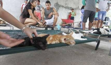 Gatos y perros fueron esterilizados.  /  Foto: Edwards Santos