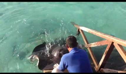 Captura de video  Dailymotion.