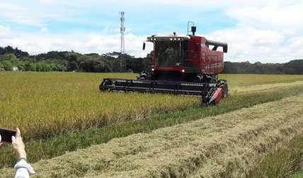 Para los productores, es importante respetar los acuerdos de la cadena agroalimentaria del arroz.  José Vásquez