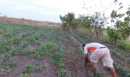 Lluvias dañaron cultivos.  Zenaida Vásquez