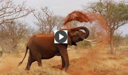 Elefante ataca un autobús y una camioneta (Video)